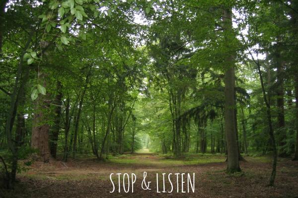 Coaching: el arte de escuchar